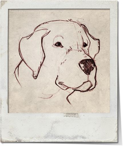 Bardolf - Il cane di Mark
