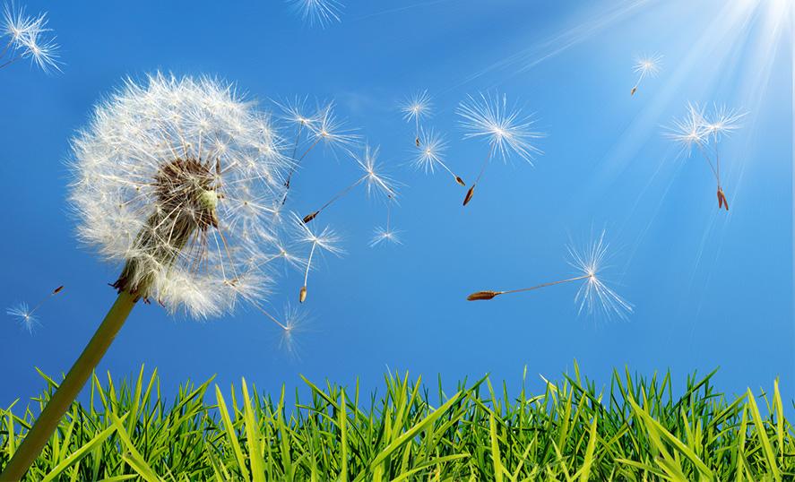 Scopri più informazioni sull'allergia stagionale a pioppi e graminacee